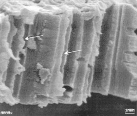 Copper nanowires profiles